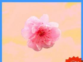 pgone《都是你》说唱精选系列-下载-江城亦梦